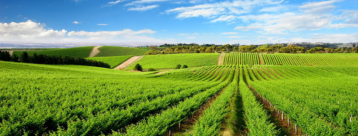 Charlottesville-Vineyards-5d3a01700a398.png
