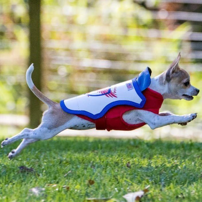 medium dog with vest on