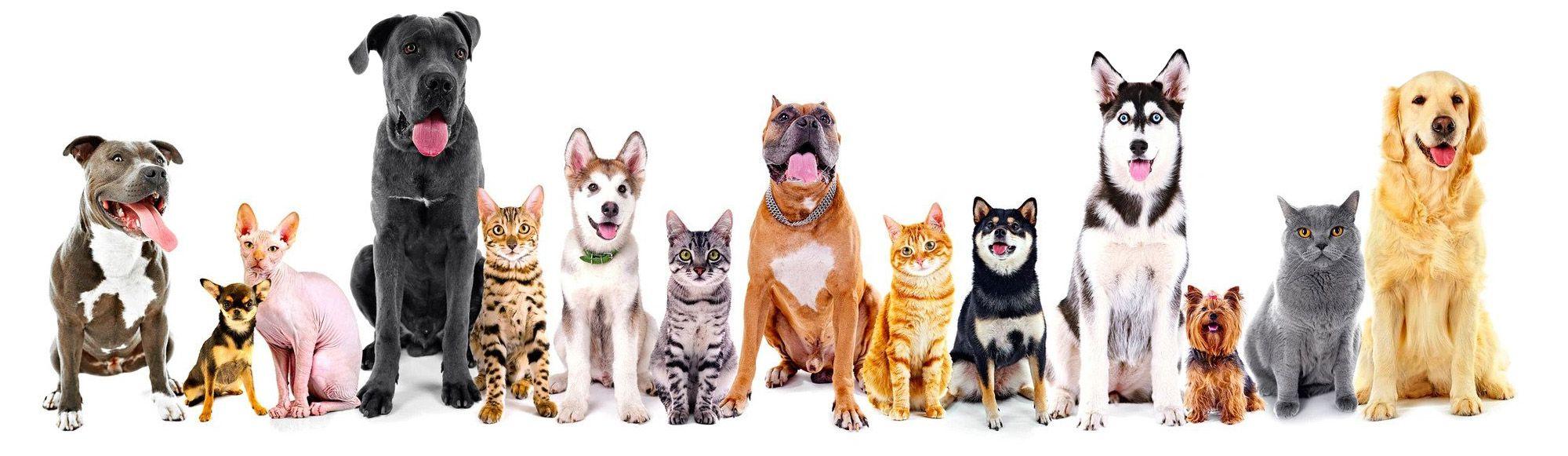 Dogs-bg.jpg