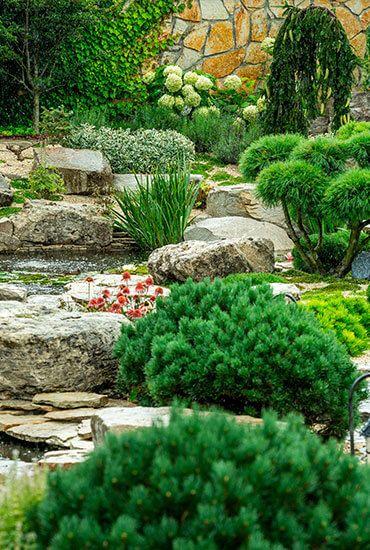 plants-5d41eee351975.jpg