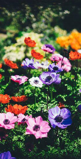 seasonalcolor-5d41f12f4e98f.jpg