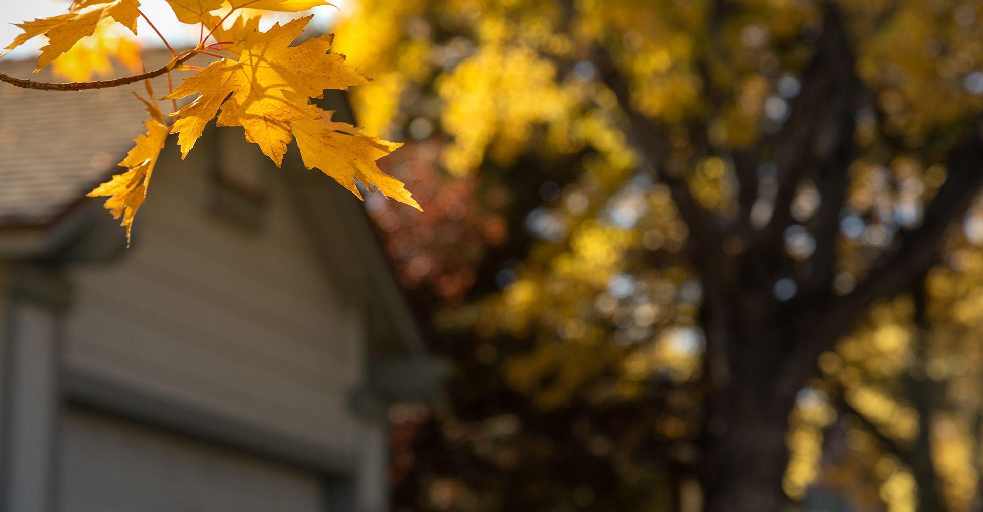 House in Autumn.