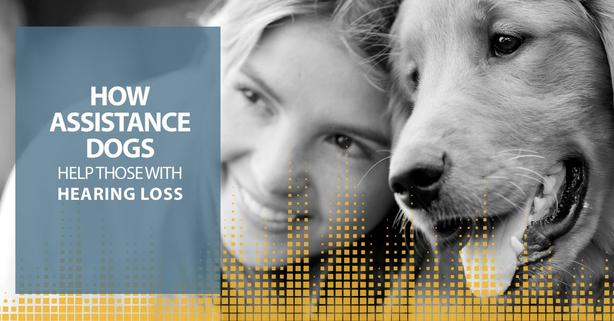 How-Assistance-Dogs-help-those-with-hearing-loss-5c23bc5b115cf.jpg