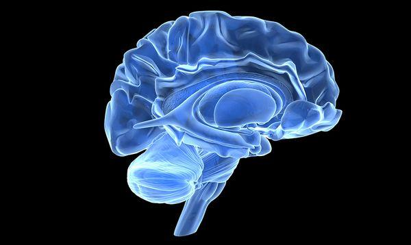 brain-606df1fea4858.jpg