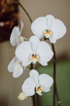 Orchid+1.jpg