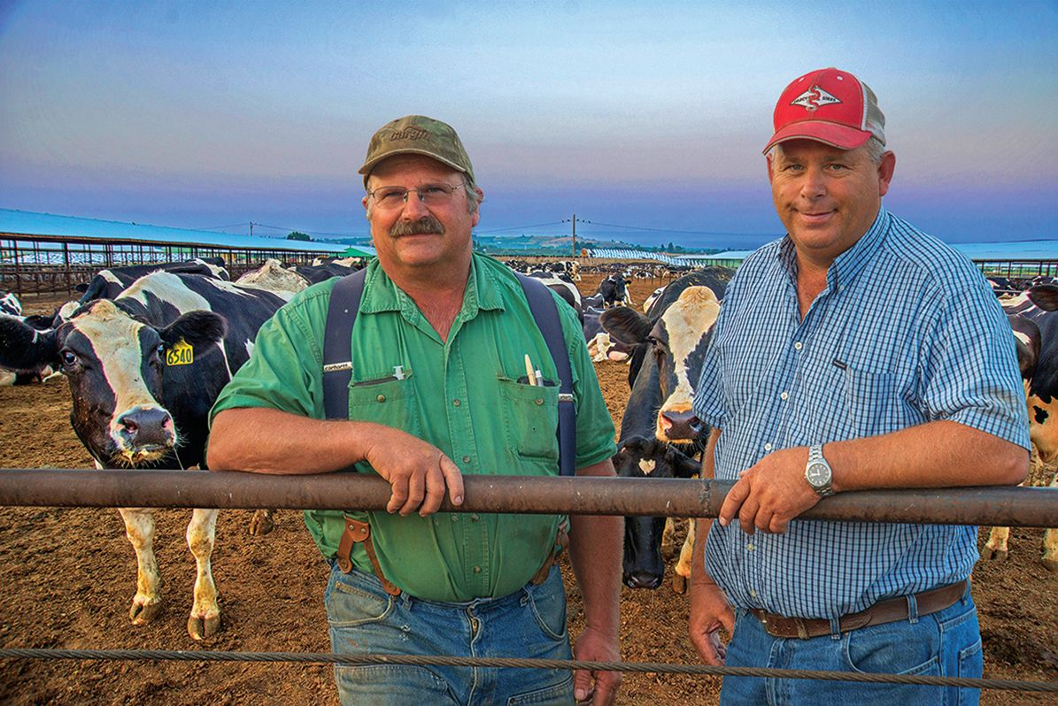 Managing a huge dairy farm is a full time job for these brothers and all their crew.
