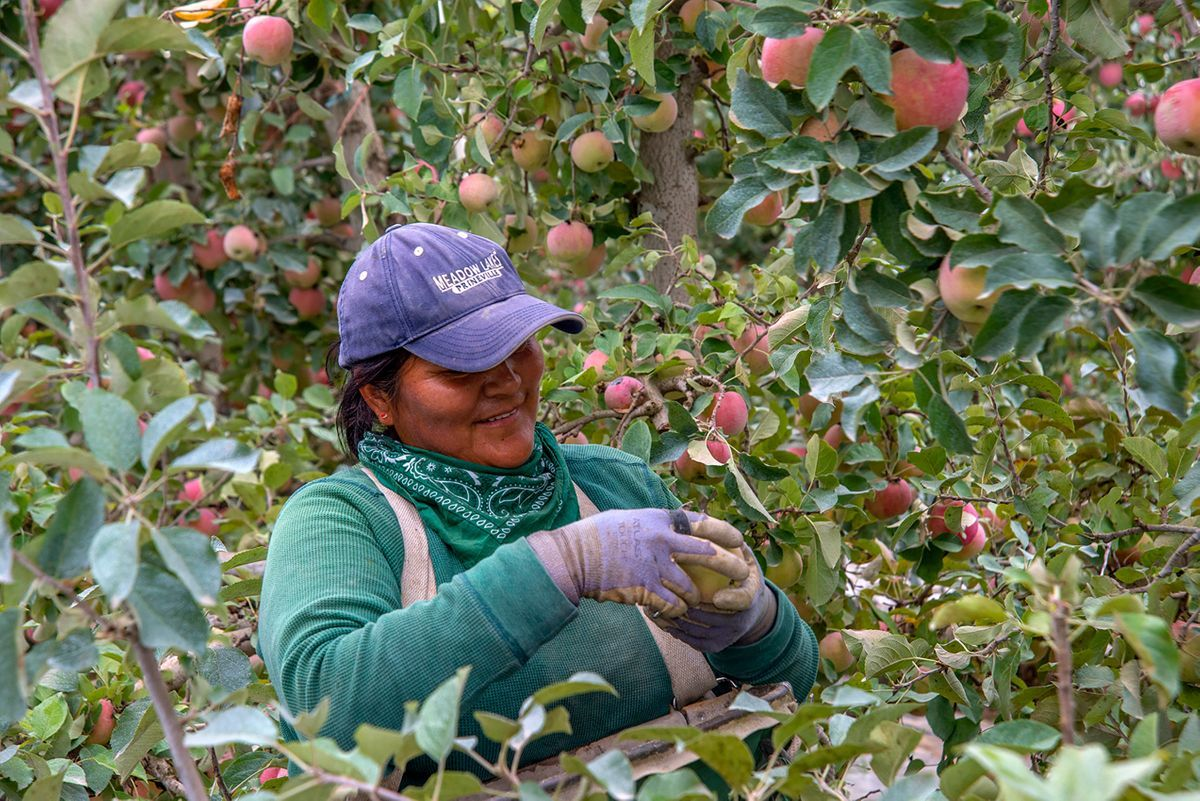Apple Farm Worker Photography.jpg