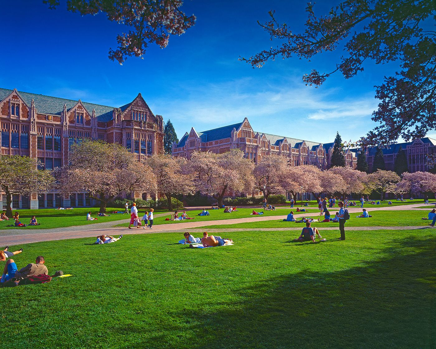 The Quad is in the north end of the Seattle campus. In the spring it is visited  by thousands of students, families and onlookers when the cherry blossums are bloom in March.