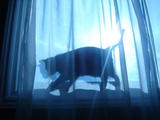cat-1392912-1280x960.jpg