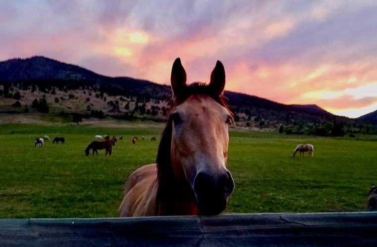 Sylvan Dale Ranch - Photo SDR.jpeg
