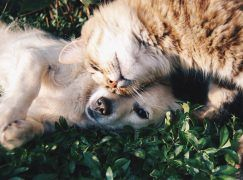 cat and dog laying on grass