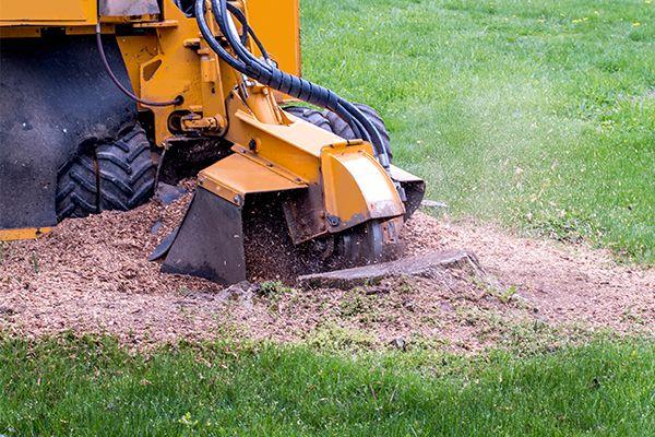 A mulcher grinding a stump