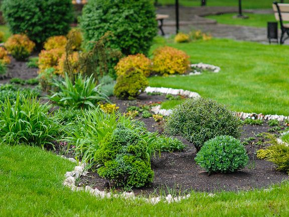 Softscaping with plants and shrubs.