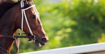 A Concise Guide to Respiratory Disease in Horses Part II featured image.jpg