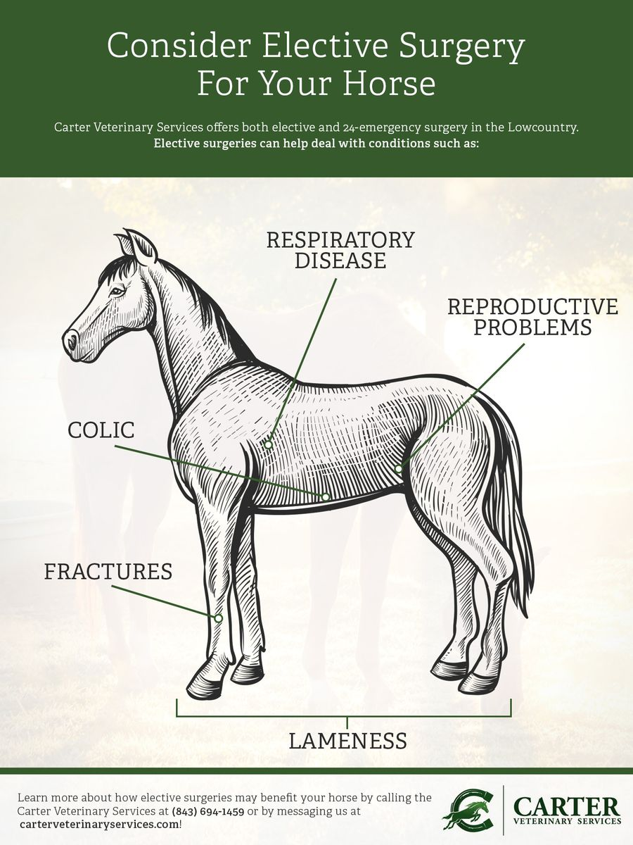 Consider Elective Surgery For Your Horse.jpg