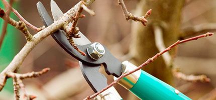 branch trimmers