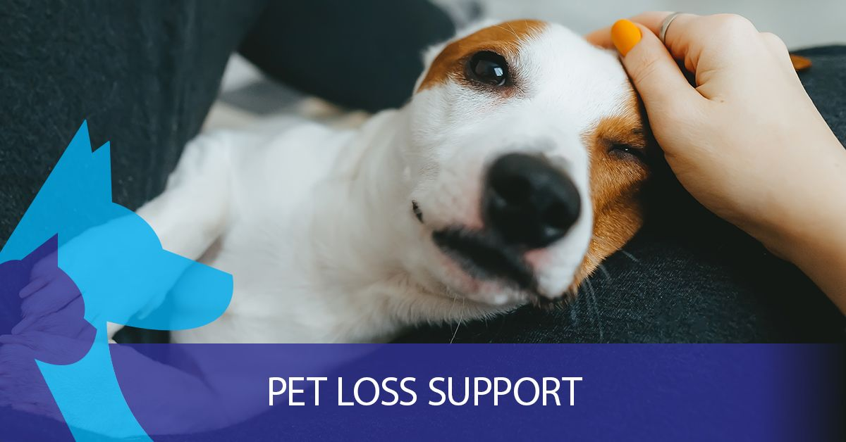 Pet Loss Support