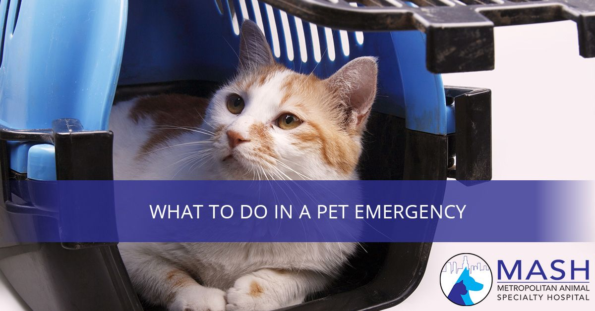 What-To-Do-In-A-Pet-Emergency-5a70afe391fd0.jpg