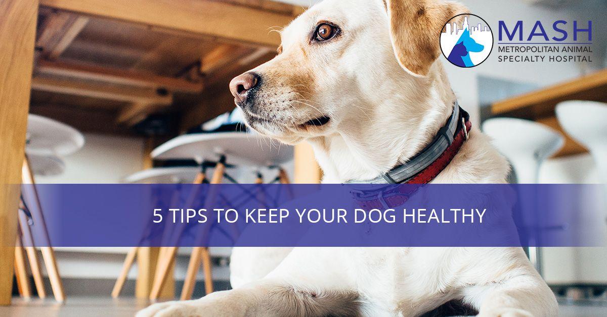 5-Tips-to-Keep-Your-Dog-Healthy-5b4778e40776a.jpg