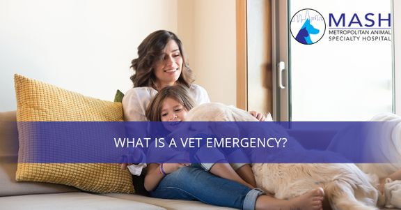 What-is-a-Vet-Emergency-5c40e2fa1fe18.jpg