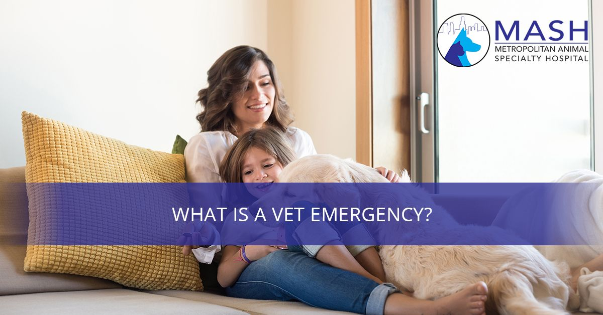What-is-a-Vet-Emergency-5c40e2fa1fe18.jpg