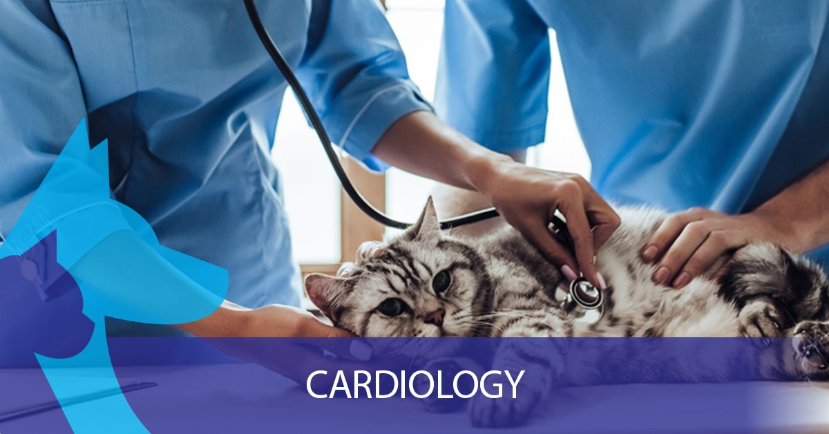 Cardiology-5f3bebc53308b.jpg