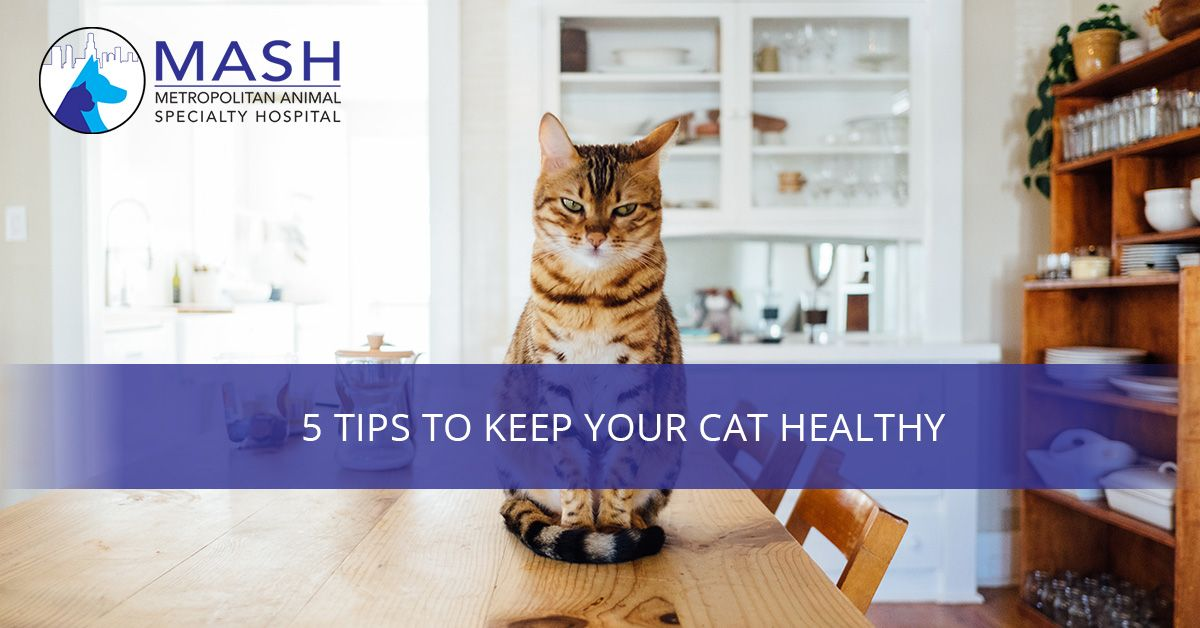 5-Tips-to-Keep-Your-Cat-Healthy-5aaa7a57eb58a.jpg