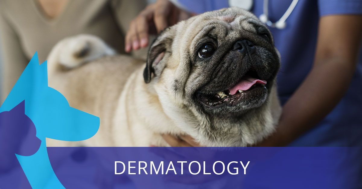 dermatologyfeatpic-5b9a869609cd4.jpg
