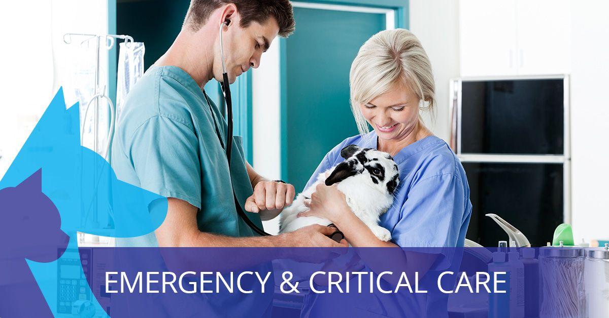 Emergency-Critical-Care-5bf417e2af9bd.jpg