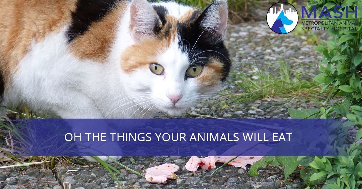 Oh-The-Things-Your-Animals-Will-Eat-59c5189eea7e2.jpg