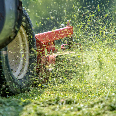 Close-up view of a lawn mower in action.