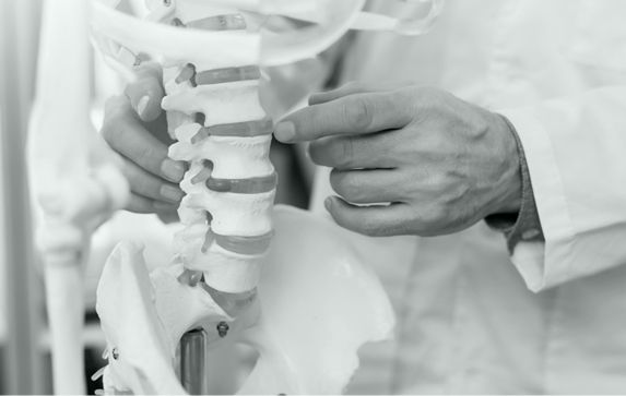 Doctor pointing to spine on fake spine