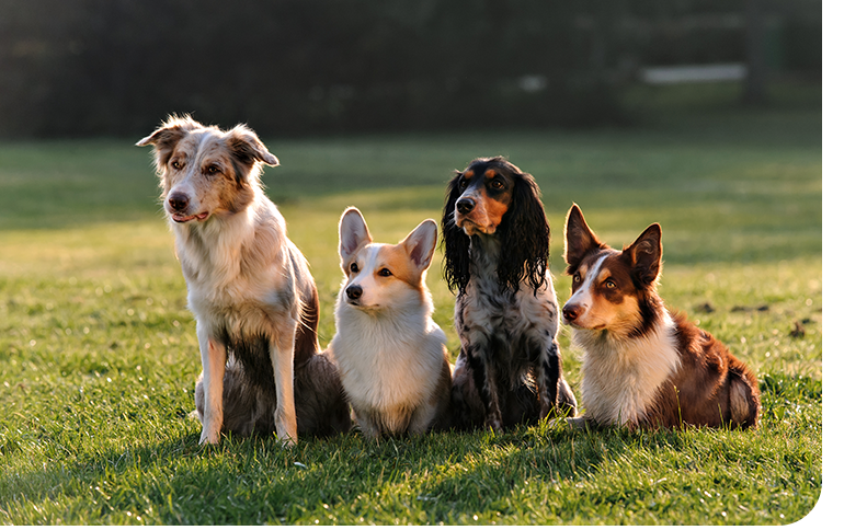A group of different dogs