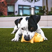 Image of a dog with a toy