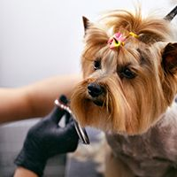 Image of a dog getting groomed