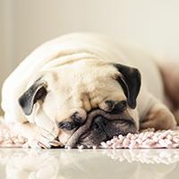 Image of a dog sleeping