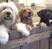 3 pups at Door DDC.jpg