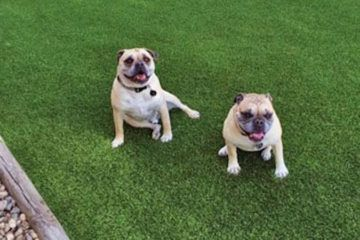 artificial_turf_dog_areas_runs_plushgrass_two_pgs-360x240.jpg