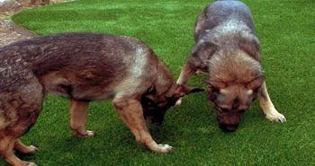 artificial_turf_dog_areas_runs_plushgrass_dog_area.jpg