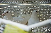 2014_Marriage_Island_Dove_Release_Thumbnail_200x_logo.jpg