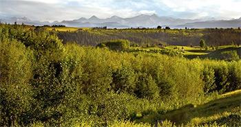 Tuscany / Royal Oak / Rocky Ridge