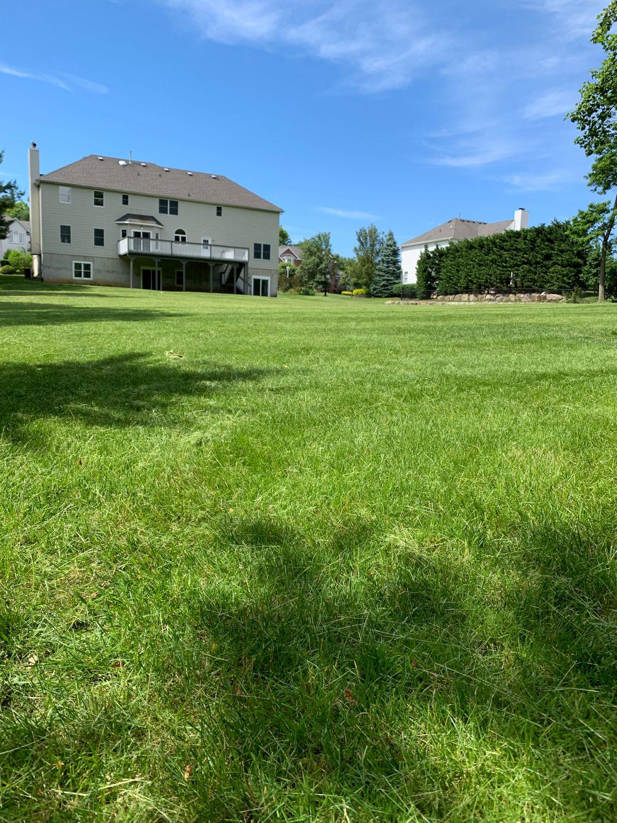 large lawn cut.JPG