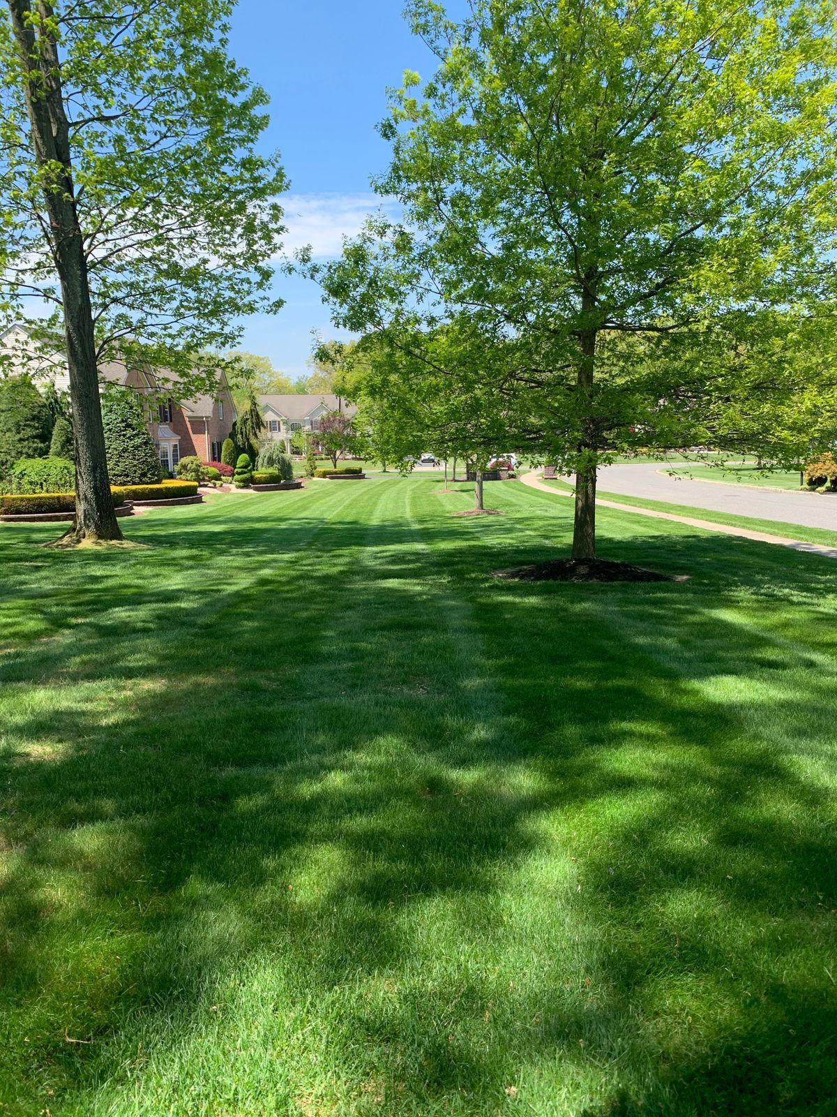 mowed lawn 4.JPG