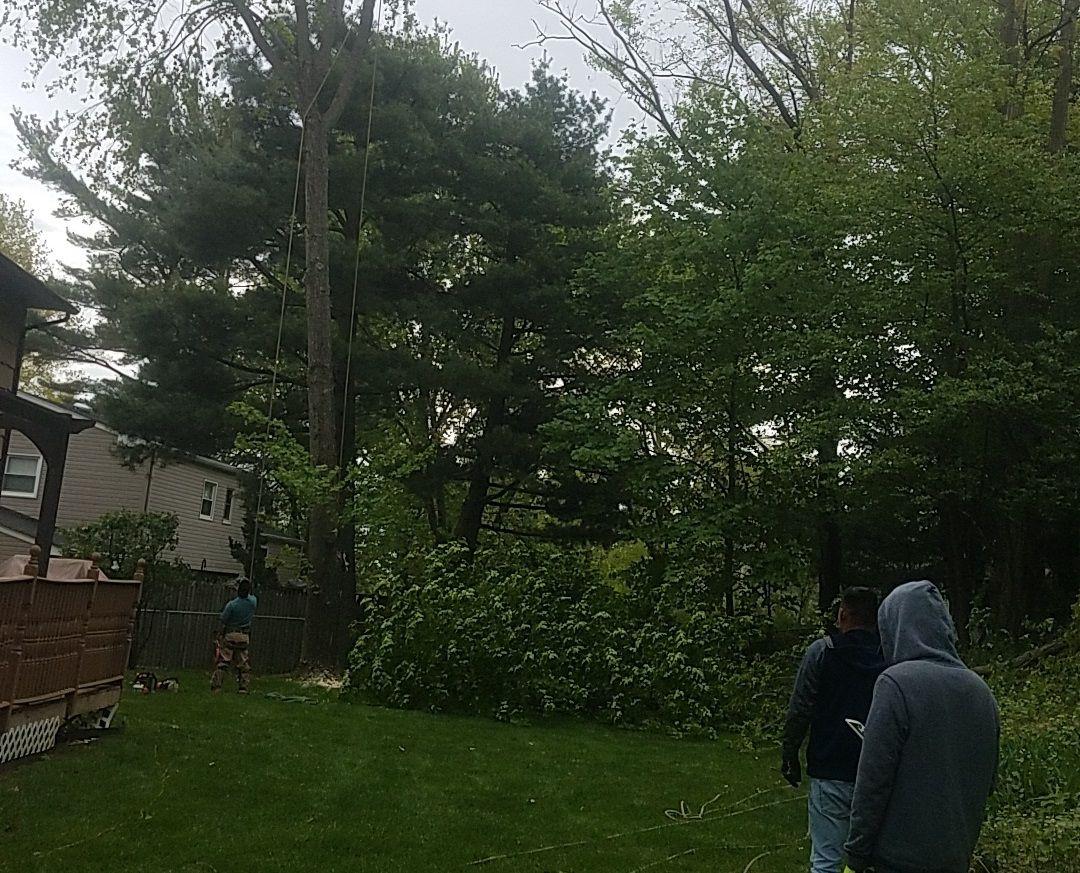 tree care service.JPG