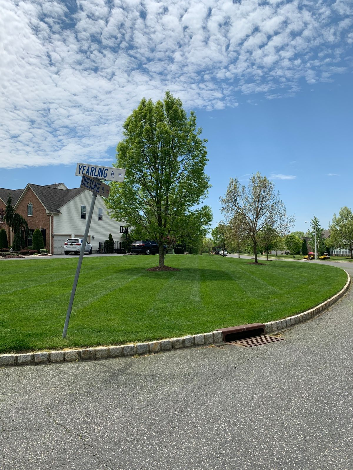 mowed lawn 2.JPG