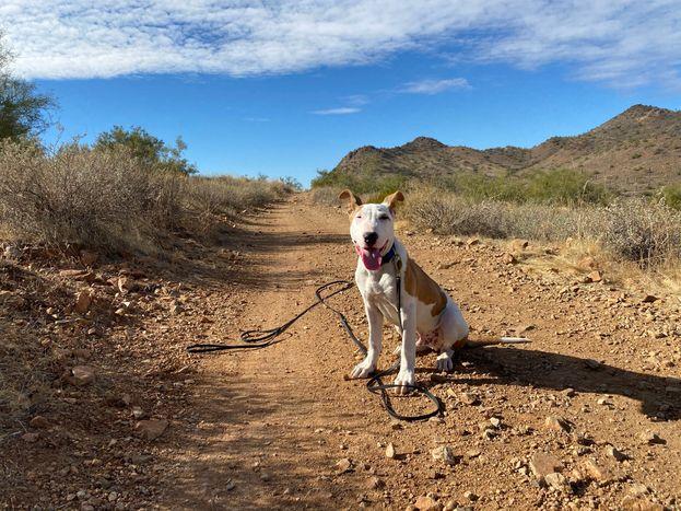 active canine 2.jpeg