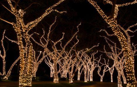 tree_wrap-768x490.jpg