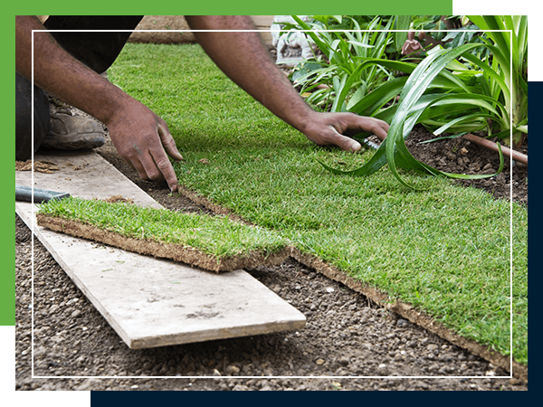 Image of a person laying down sod
