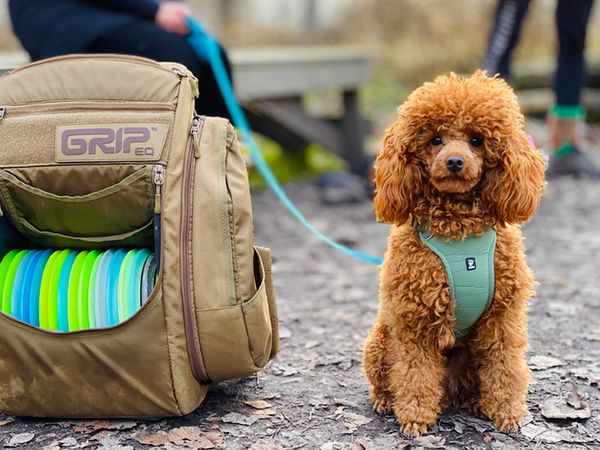 A frisbee golf bag next to a cute dog.