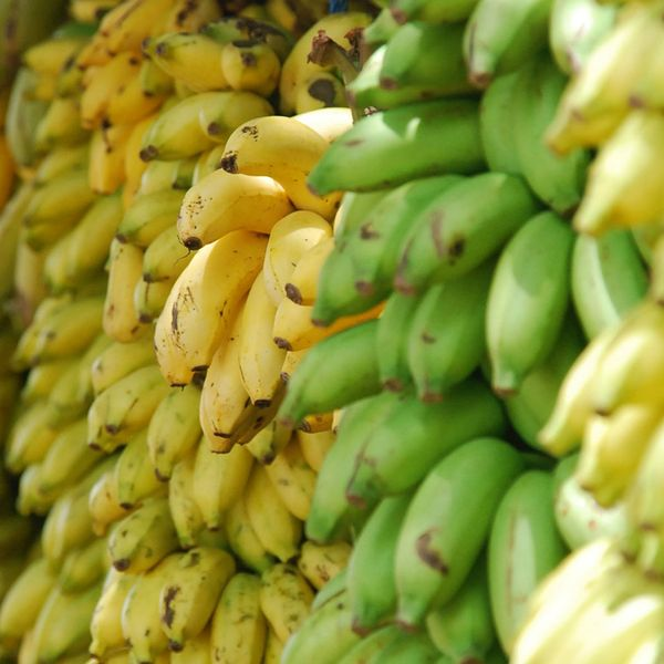 Bunches of unripe and ripe plantains.
